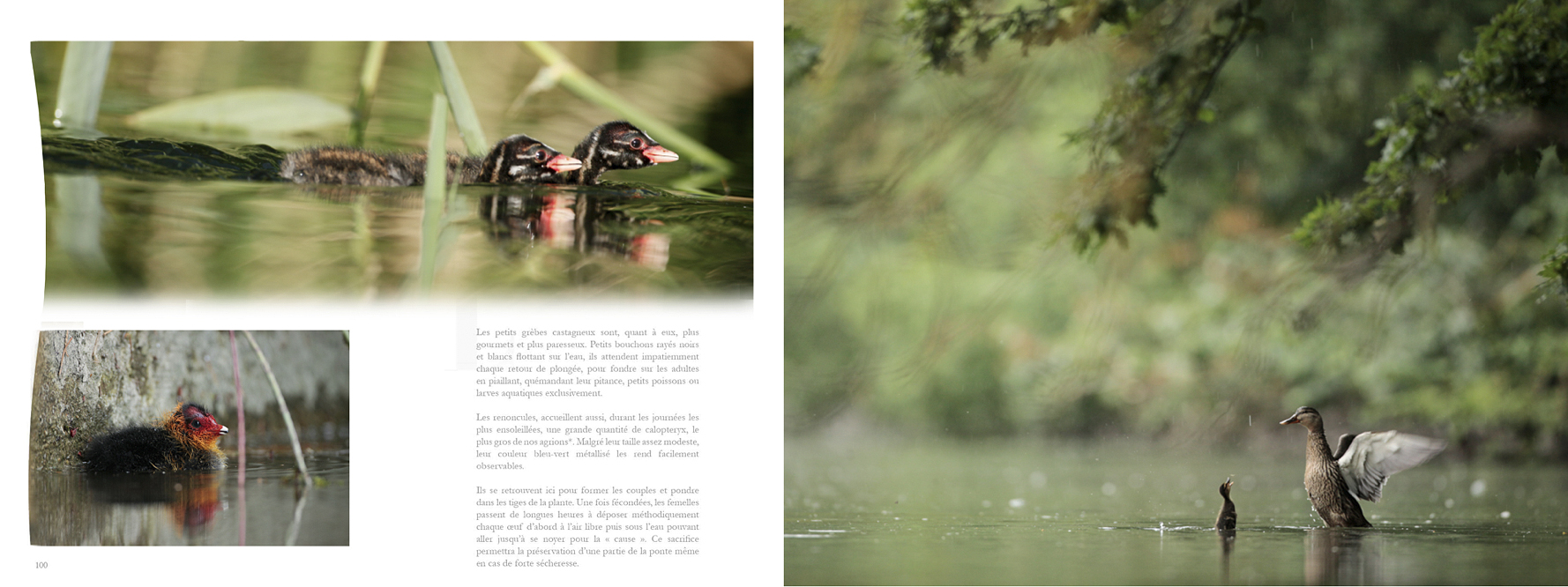 Pages du livre Loiret petite Loire de région Centre