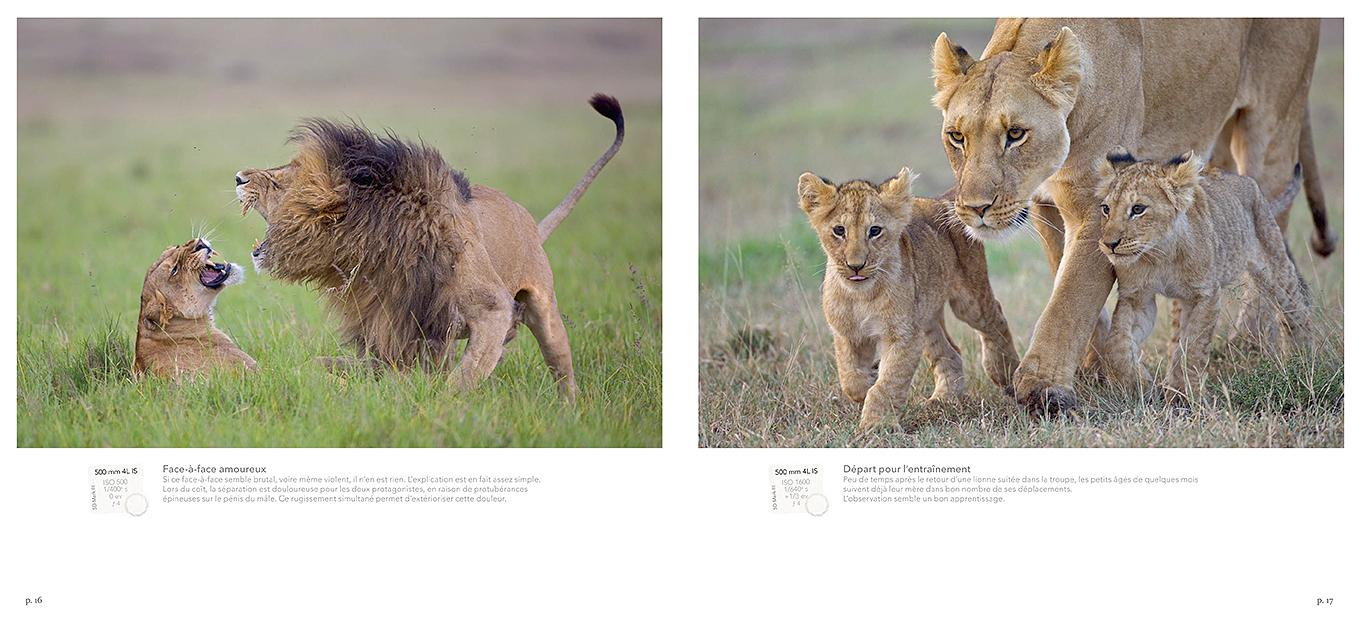 Pages du livre Lions rois du Mara