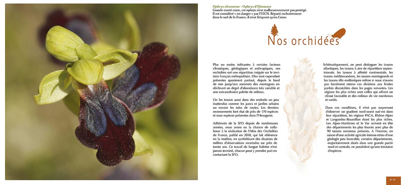 Pages du livre Belles et sauvages, les orchidées françaises