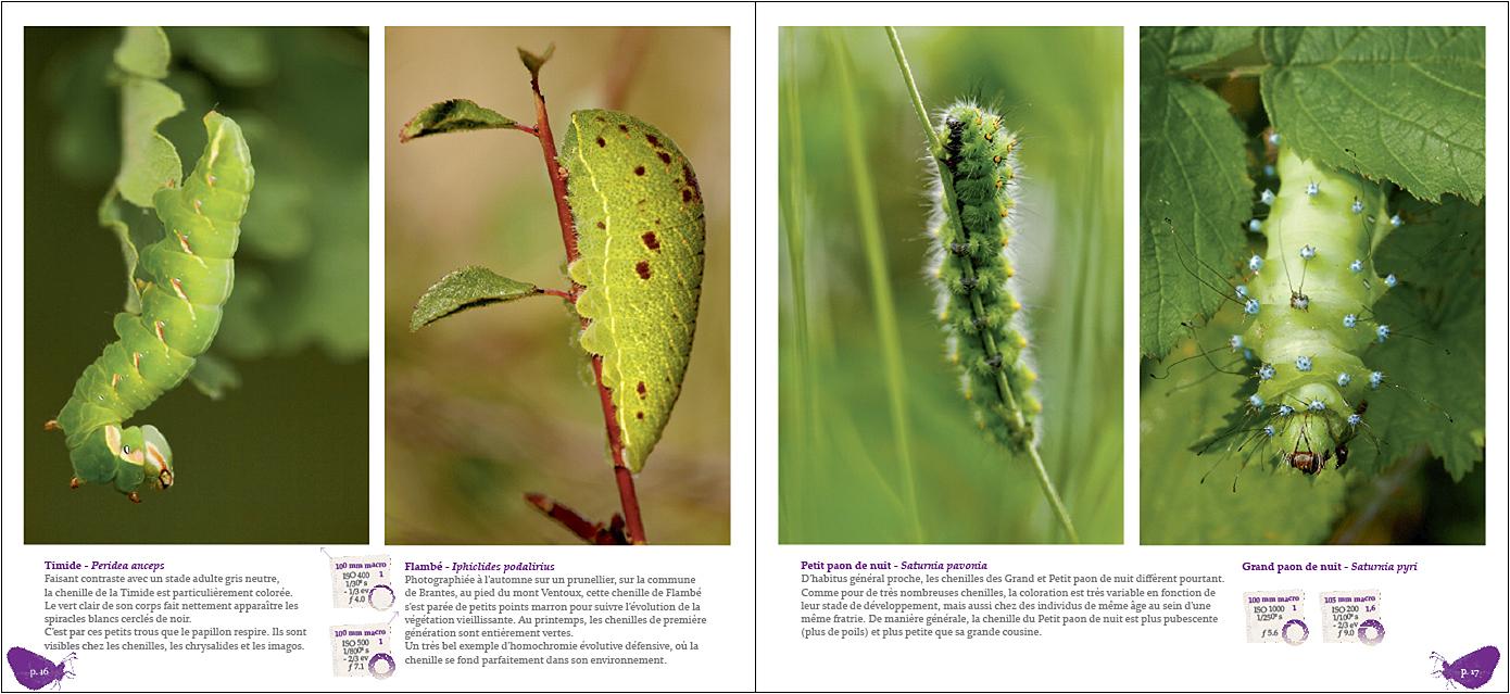 Pages du livre Papillons tout naturellement